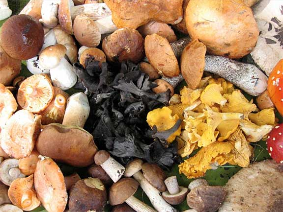 Mixed mushrooms from Lithuania